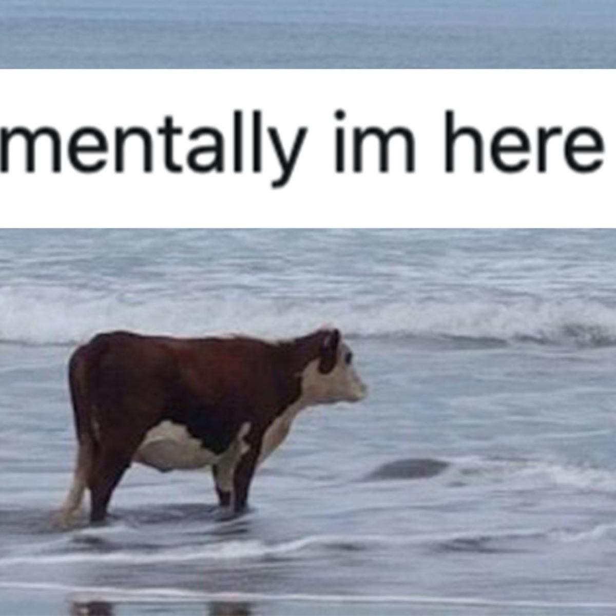 The 'Mentally I'm Here' Meme Explained